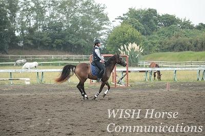 初志貫徹と有言実行の乗馬