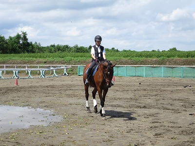 馬と挨拶、返事