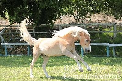 馬の幸せを想う乗馬