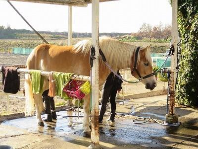 馬のニーズを満たす