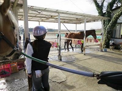 穏やかな馬と仲良くしよう