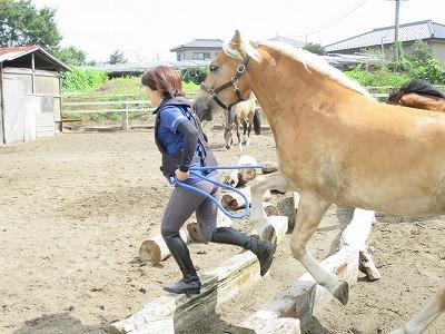 馬と一緒にいろんなことを