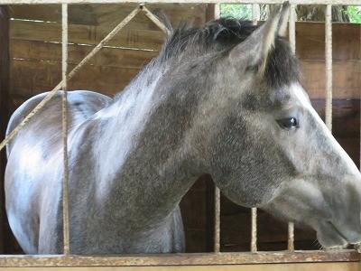 馬の触り心地