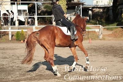 馬の変化に気がつく乗馬