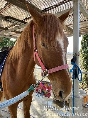 安らかな馬の表情