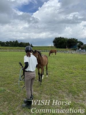 乗馬の嬉しい瞬間
