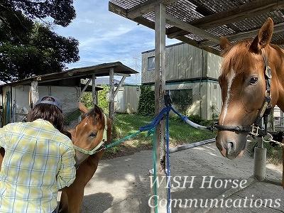 馬と仲良くなれる乗馬