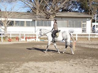 真っ白な馬体