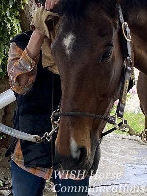 手入れを喜ぶ馬