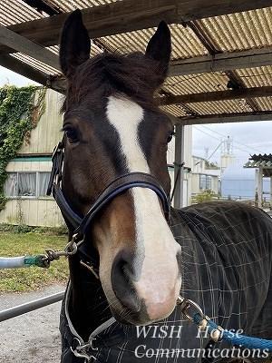 覇気のある馬の顔
