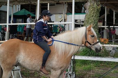 馬とじゃれて遊びたい