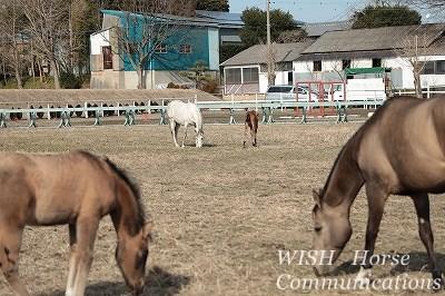 穏やかな乗馬