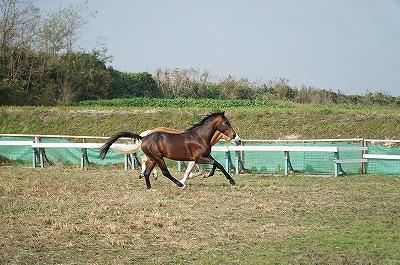 馬を愛していますか?