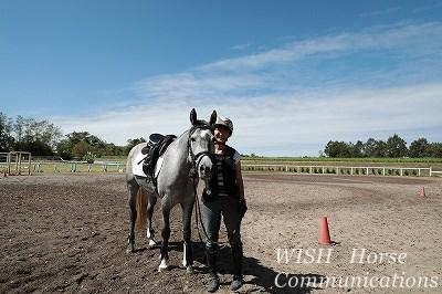 馬とコミュニケーションしよう!