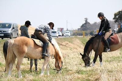 警視庁騎馬隊