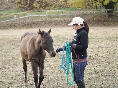 馬と心を通わせるクラブ
