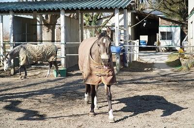 馬に認められる