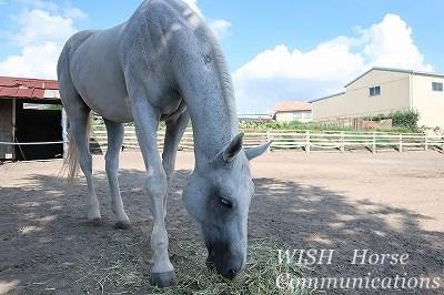 馬と会話しながら騎乗したい