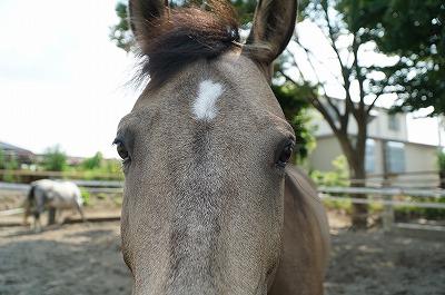 馬の心を溶かすように