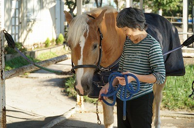 馬の知的好奇心を満たそう!