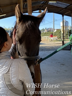 馬の気持ちを考える