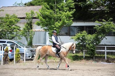 楽しく馬とのコミュニケーションを