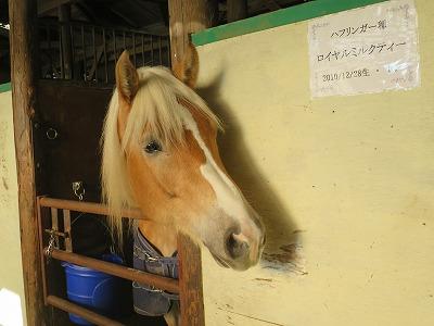 愛されている馬達
