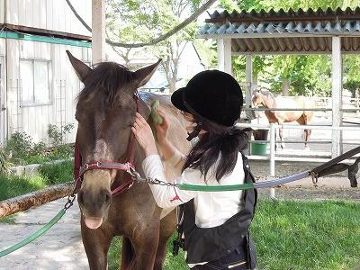 馬が気持ち良くなる手入れ