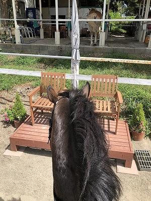 自分の頭で考えられる馬に育てる