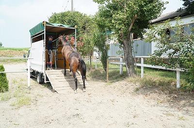 馬の育成調教預託受付中