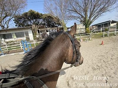 馬と一緒に走る