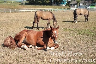 休憩する馬