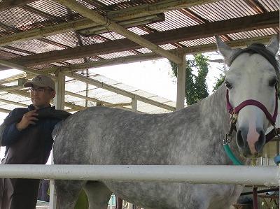 馬の発情チェック