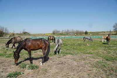馬の気持ちもほぐれる身体もほぐれる