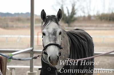 乗馬の表情