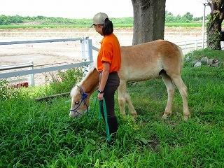 馬とお散歩♪