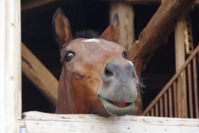 馬の良い表情