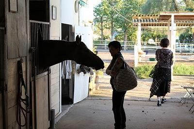 生き生きした馬と、人への好奇心
