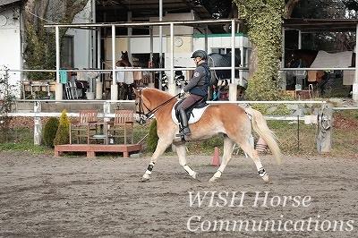 馬をパートナーにする乗馬