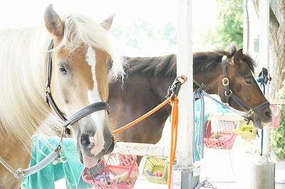 馬は本来感情豊か