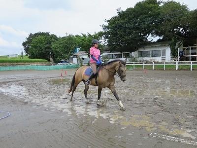 成長した馬の良い駈歩