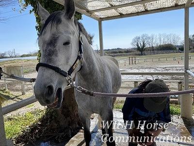 普通の乗馬