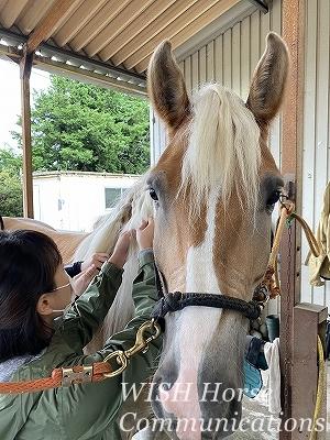 馬を愛するとは