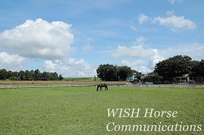 馬の牧草地