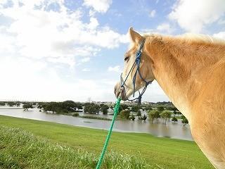 ウィッシュは利根川近くの乗馬クラブです