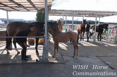 楽しい馬の手入れ