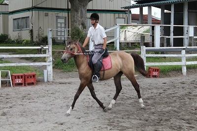 馬の音声扶助調教