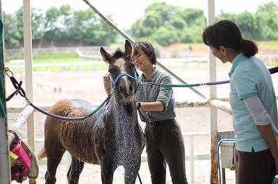 良く調教されている乗馬