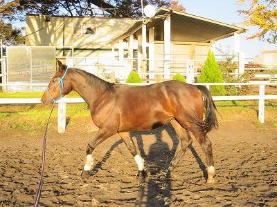 馬の毛艶の管理