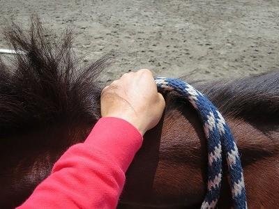 新馬調教 手綱の持ち方